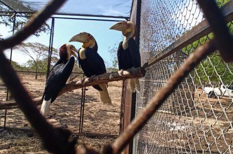 Pelepasliaran Satwa Liar Dilindungi Di Taman Nasional Baluran